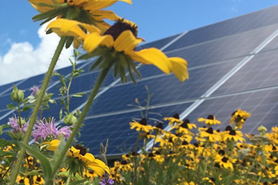 Image depicts solar panels against a blue sky with sunflowers in the foreground.