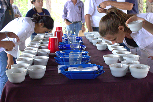 Coop trade el salvador cupping-web 6a5ab