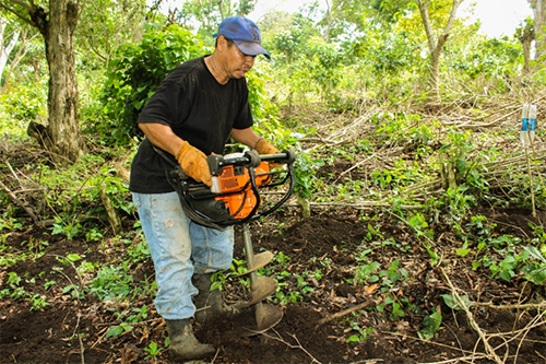 Electric augers are making planting new coffee trees much easier.