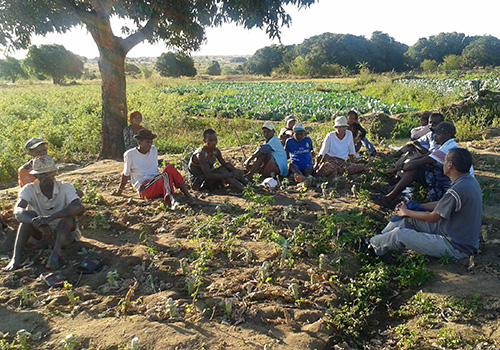 Farmer-to-Farmer volunteer opportunities in Madagascar now open!