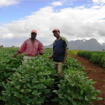 Mozambique Soybean Farmers 350x350