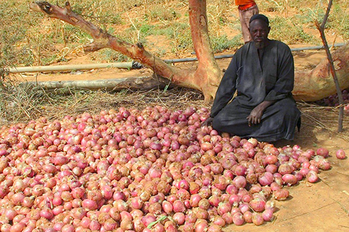 An Alah Yidi farmer displays his onion crop in Burkina Faso.