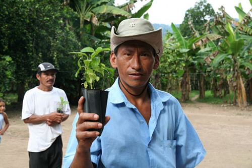 National Co+op Grocers' Co+op Forest carbon offset initiative in Peru is just one of the innovative ways cooperative businesses are working to mitigate climate change. [photo courtesy Pur Projet]