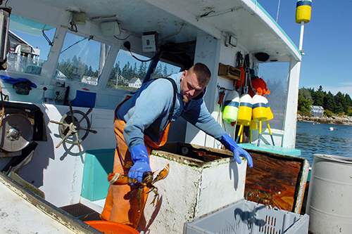 A lobsterman with Stonington Lobster Co-op unloads his catch. Stonington is one of 20 lobster co-ops along the coast of Maine, each a central piece of social and economic infrastructure in their community. [photo courtesy Bangor Daily News/Bridget Brown]