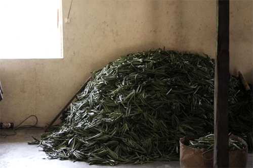 Vanilla sits in a farmer's home under protection from thieves as prices rise to $500 per kilo. [photo: RIJASOLO/AFP]